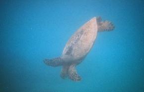 An Unreasonable Fear ofSnorkeling