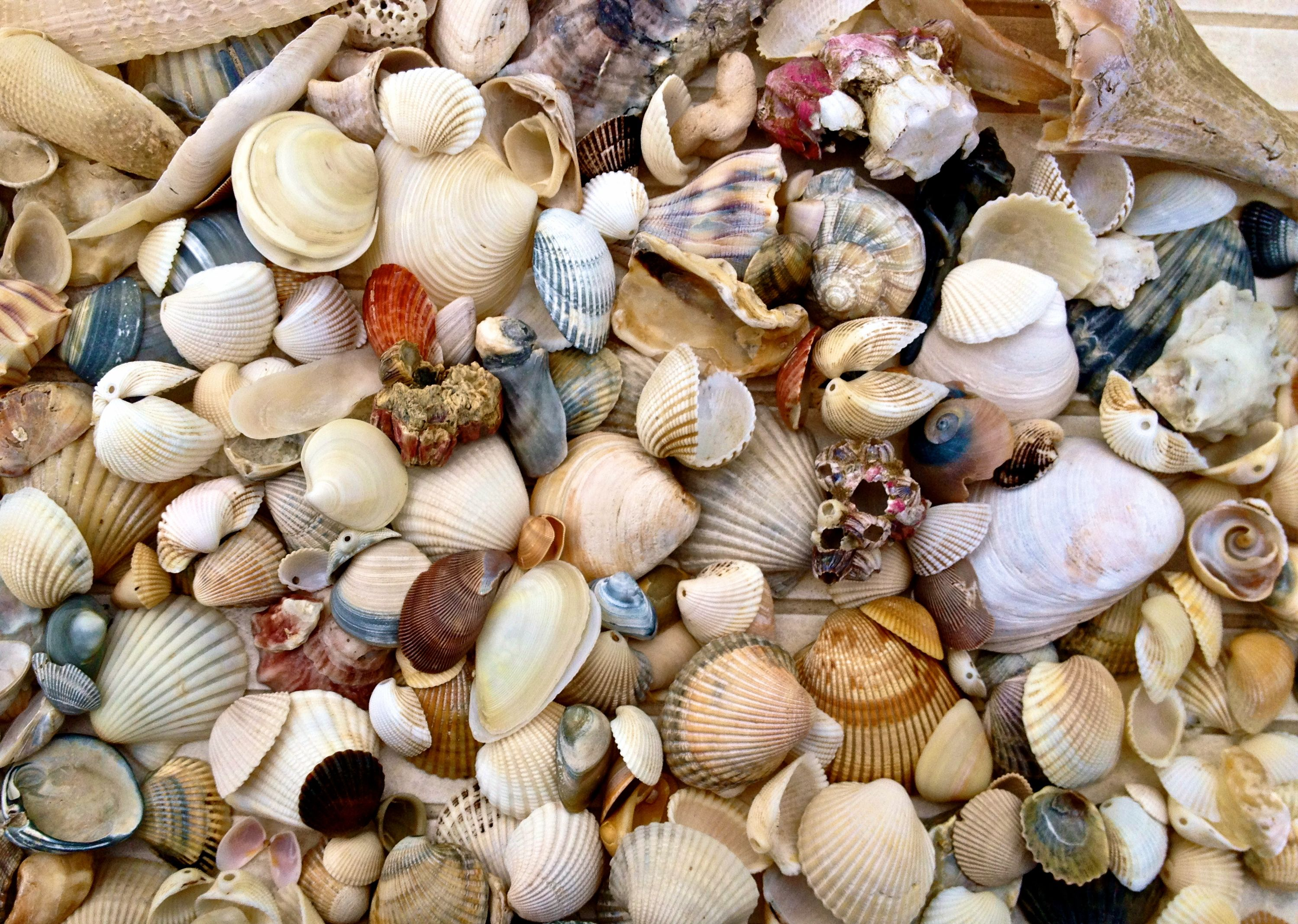 make a simple seashell mobile big scout project