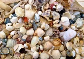 Make a Simple Seashell Mobile