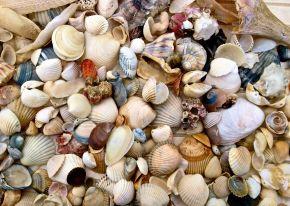 Make a Simple SeashellMobile
