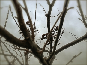 Photo Essay #7: Things That Live inTrees
