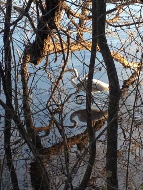 Photo Essay #5: Lady Bird Lake, an UrbanOasis